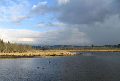 Burnaby_Lake_on_a_cloudy_day